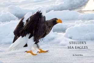 Wildlife Photographic Often Features Articles From NaturesLens, Such As The One On Stellars Sea Eagles On The Pack Ice In Japan