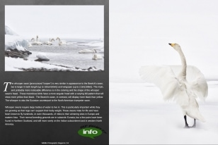 Wildlife Photographic Often Features Articles From NaturesLens, Such As The One On Swans On A Frozen Lake In Japan