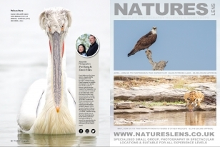 Wildlife Photographic Often Features Articles From NaturesLens, Such As The One On The Dalmatian Pelicans Of Kerkini