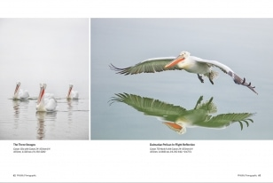 Wildlife Photographic Often Features Articles From NaturesLens, Such As The One On The Dalmatian Pelicans Of Lake Kerkini