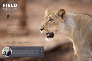 Wildlife Photographic Regularly Features Images From NaturesLens, Such As This Asiatic Lion In The Field Notes Series