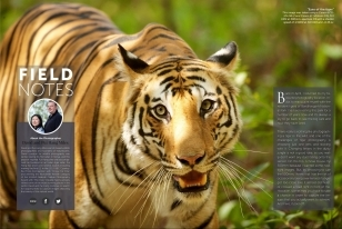 Wildlife Photographic Regularly Features Images From NaturesLens, Such As This Bengal Tiger In The Field Notes Series