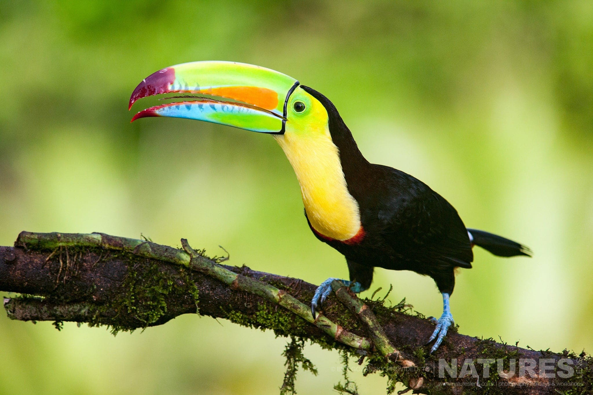 A keel-billed toucan photographed at one of the locations that feature on the NaturesLens Wildlife of Costa Rica Photography Holiday