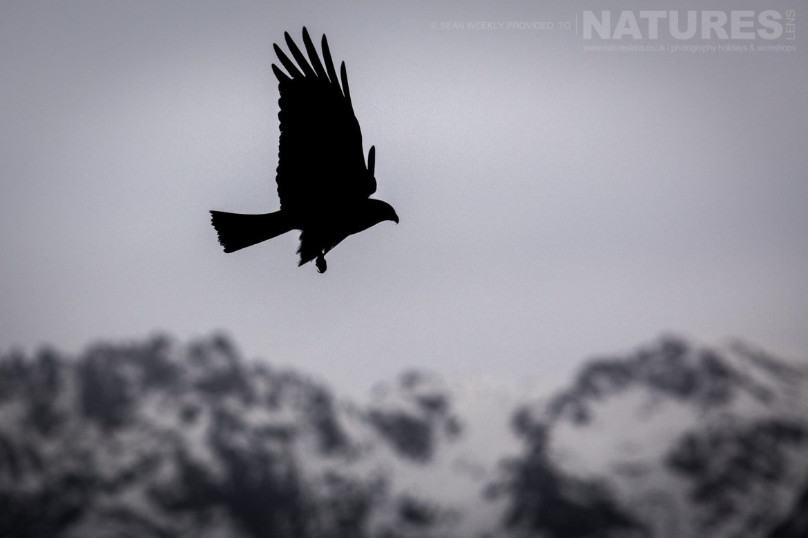 One Of The Silhouetted Against The Sky, With The Sierra De Gredos Mountain Range Behind Image Captured During The 2018 Spanish Bird Photography Holiday In Calera