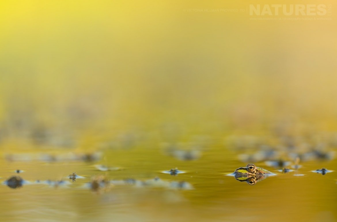 An Autumnal Frog Image By Victoria Hillman