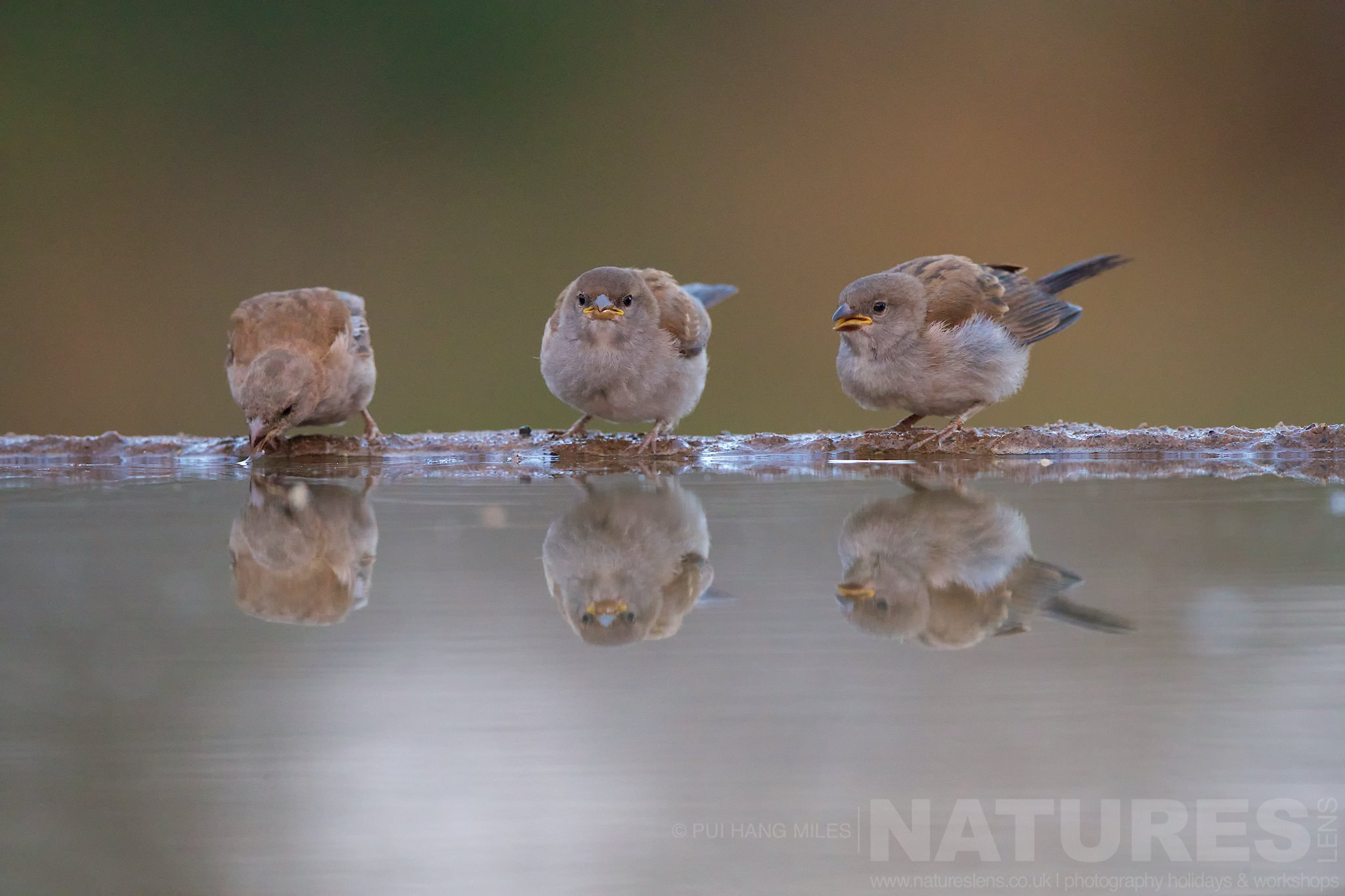 A Trio Of Quelea   Captured During The Natureslens South African Wildlife Zimanga Photography Holiday