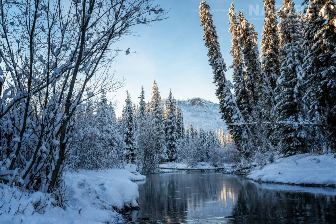A View Of The Fishing Branch River   Captured During The Natureslens Ice Grizzlies Of The Yukon Photography Holiday