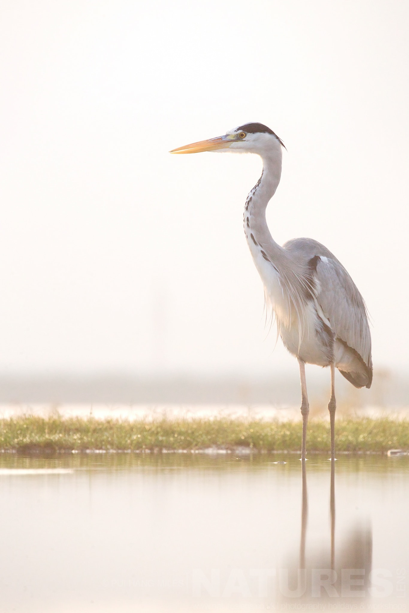 Heron At Sunrise   Captured During The Natureslens South African Wildlife Zimanga Photography Holiday
