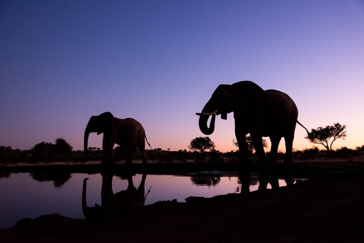 A pair of elephants photographed as the sun sets - photographed at the locations usxed for the NaturesLens Mashatu, Land of the Giants Photography Holiday