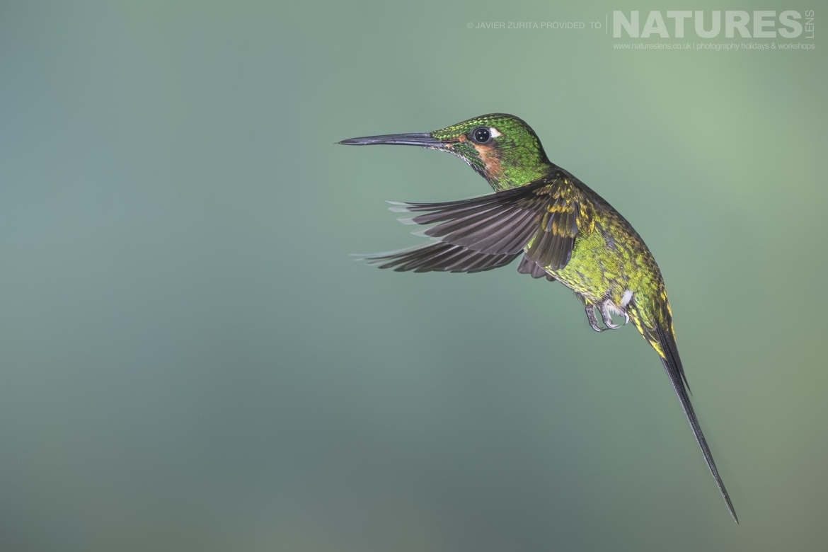 Images of Hummingbirds should be achievable during the NaturesLens Hummingbirds More of Ecuador Photography Holiday
