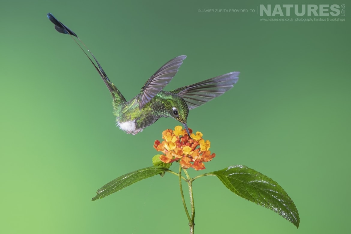 Images of Hummingbirds with stunning settings should be achievable during the NaturesLens Hummingbirds More of Ecuador Photography Holiday