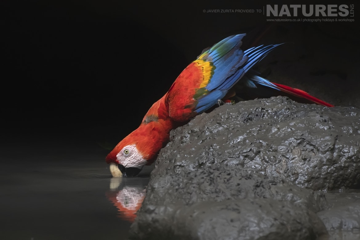 Images of various types of Macaw should be achievable during the NaturesLens Hummingbirds More of Ecuador Photography Holiday
