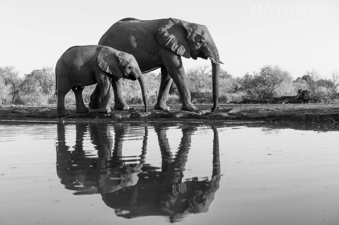 Elephants in black & white - photographed at the locations used for the NaturesLens Mashatu, Land of the Giants Photography Holiday
