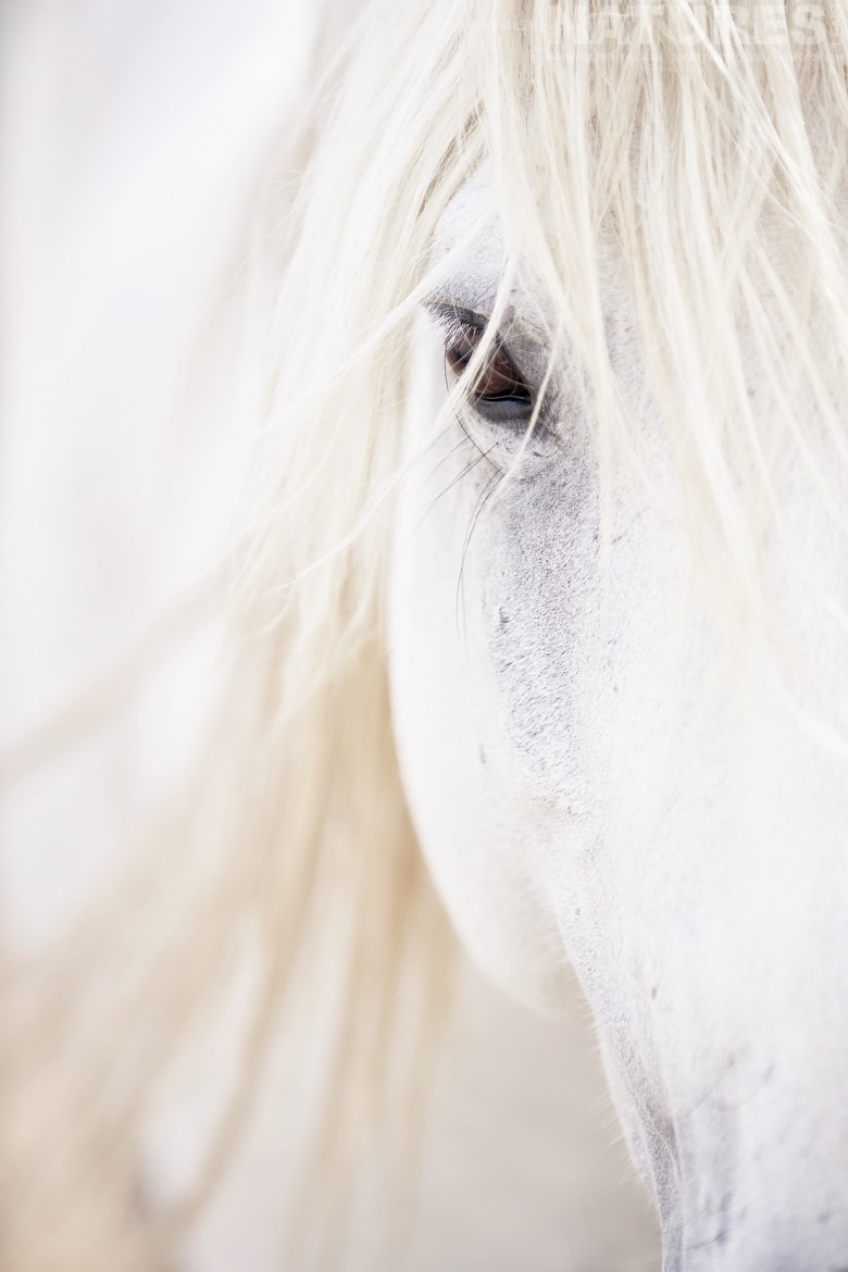 A close up portrait of a white stallion photographed during the NaturesLens White Horses of the Camargue Photography Tour
