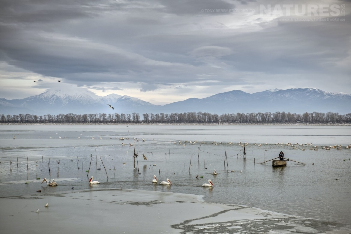 A view of the lake with the mountains pelicans on the few clear stretches of water photographed by Tony Berry during one of the 2019 NaturesLens Dalmatian Pelicans of Lake Kerkini Photography Tours