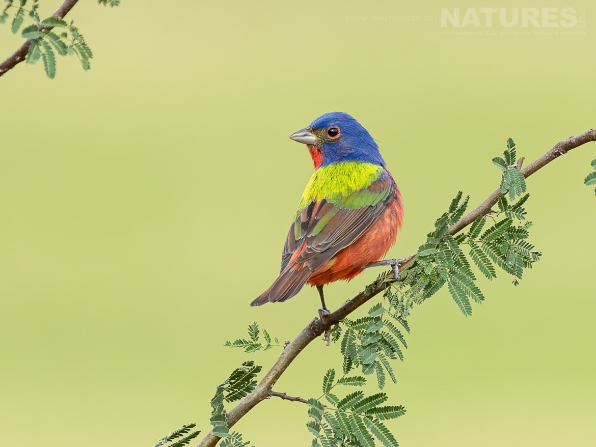 Beautiful perched bird images with perfect backgrounds will be added to each photographers portfolio during the NaturesLens Birdlife of the Rio Grande Valley Photography Holiday