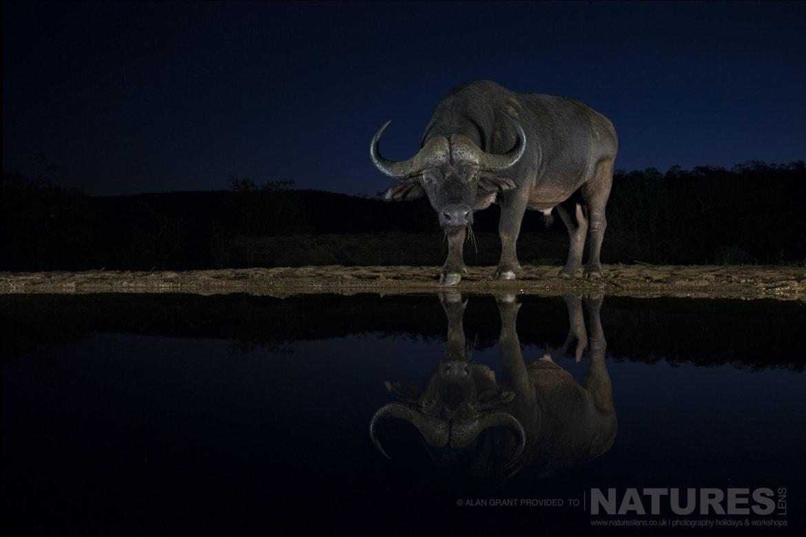 Cape Buffalo reflection taken at night during the NaturesLens photography holiday
