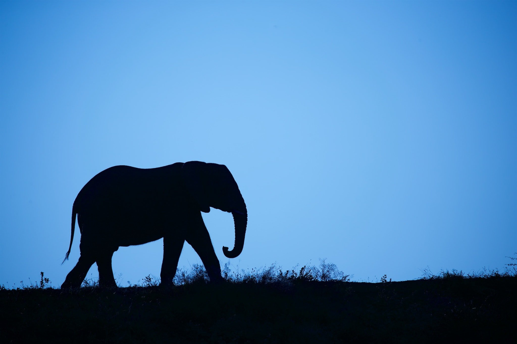 An elephant silhouetted against the skyline image captured within Zimanga Game Reserve in Kwazula Natal South Africa
