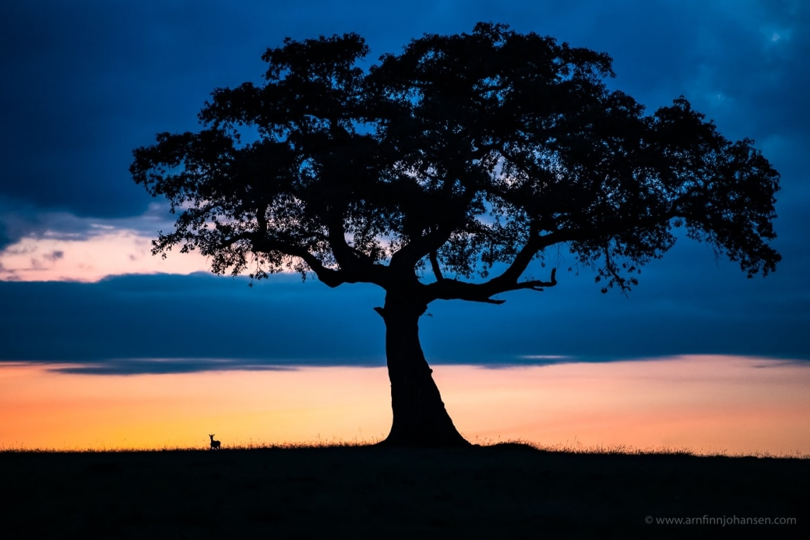 An African sunset landscape scene photographed in the locations to be used for the NaturesLens Wildlife of Africas Maasai Mara Photography Holiday