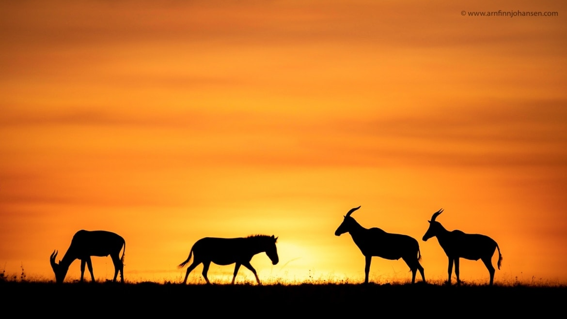 An African Sunset Photographed In The Locations To Be Used For The NaturesLens Wildlife Of Africas Maasai Mara Photography Holiday