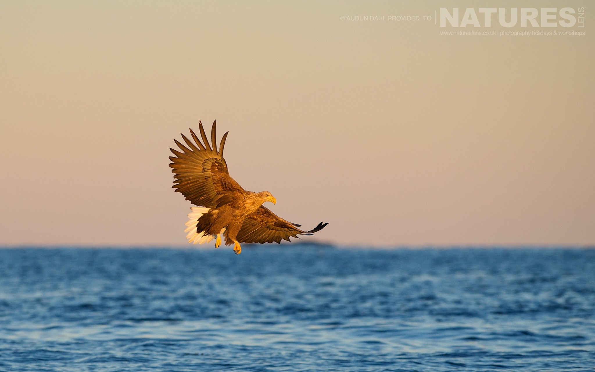A White tailed Eagle flies over ice cold waters photographed at the locations used for the NaturesLens Winters White tailed Eagles of Norway photography holiday
