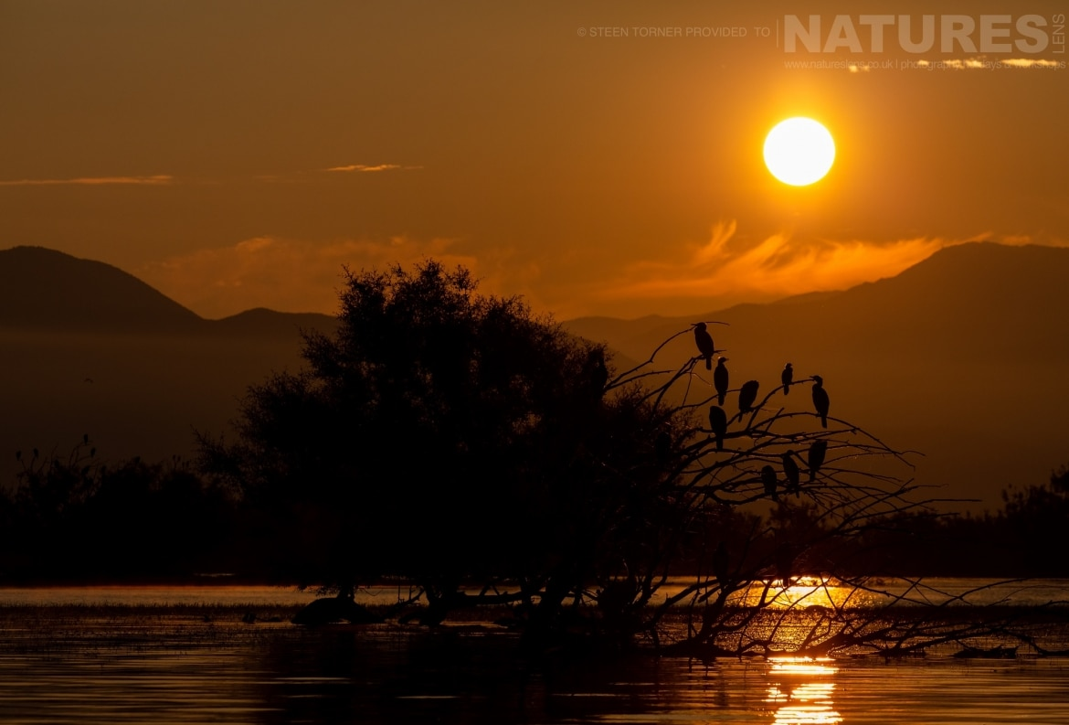 Cormorants at sunrise in the dead forest photographed during the Spring Birds of Kerkini photography Holiday conducted by NaturesLens