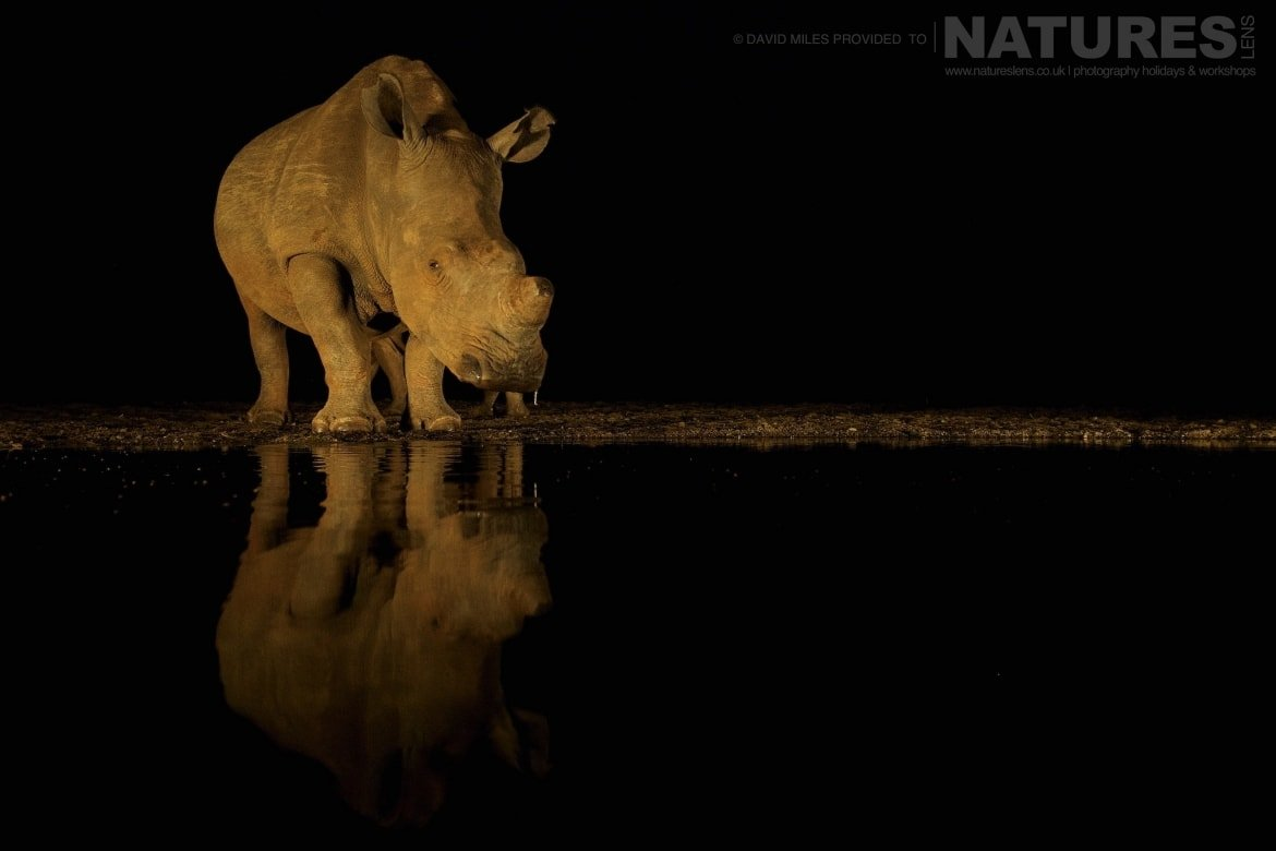 White rhino at night captured during the Zimanga Wildlife Hides and Safaris photography tour led by NaturesLens