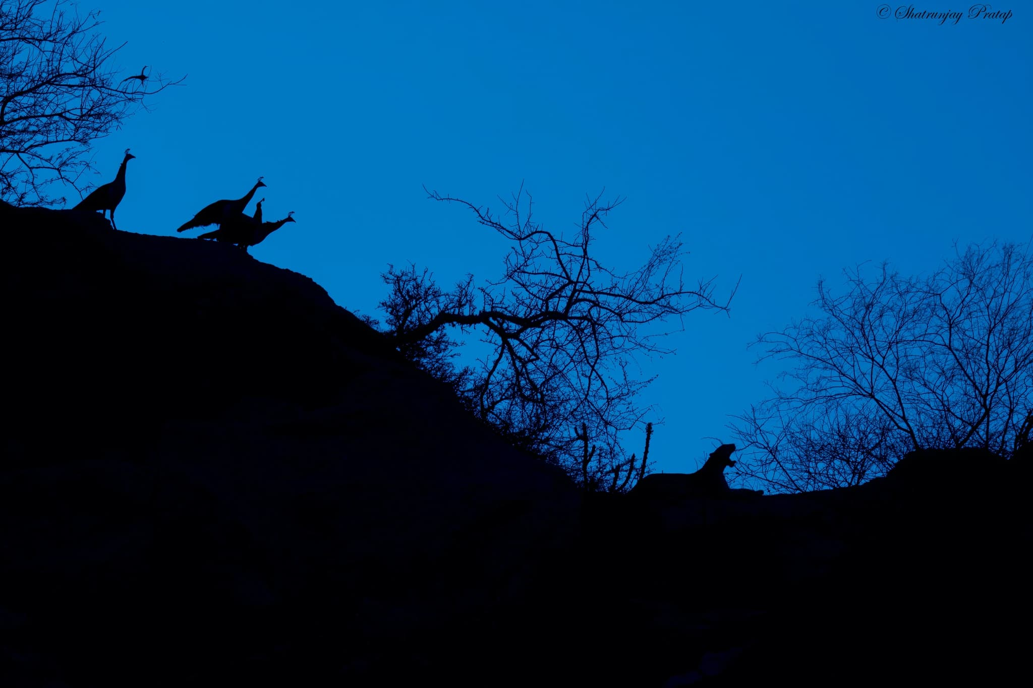 Wildlife silhouetted against the horizon photographed in Bera Jawai the location for the NaturesLens India's Leopards of Bera Photography Holiday