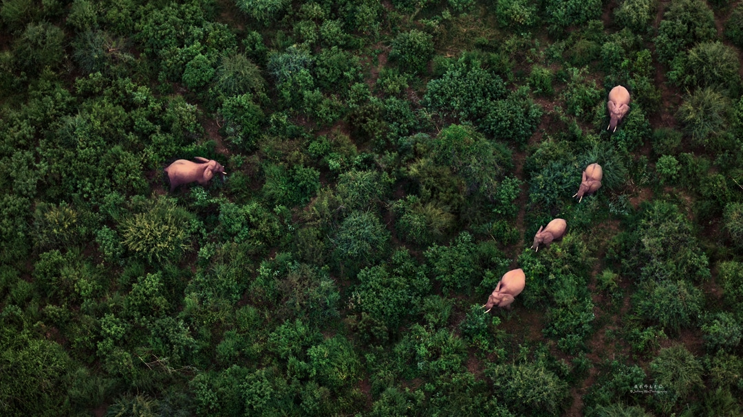 A group of elephant photographed from a helicopter - photographed at the lodge used for the NaturesLens Wildlife Hides & Safaris of Kenya Photography Holiday
