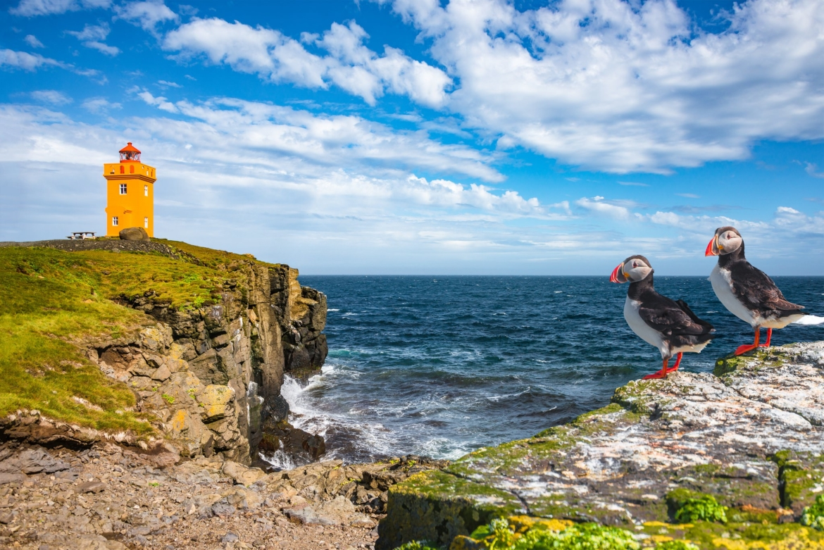 A pair of puffins with Grimsey Island lighthouse in the background the location for the NaturesLens Puffins of the Arctic Circle photography holiday